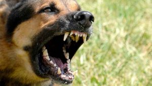 dog attack leads to arrest